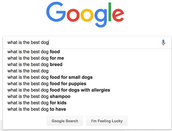Google search for dog problems